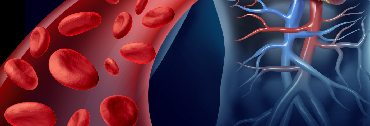 Altered Blood Vessel Response May Explain Hypertension in AIP, Mouse Study Suggests