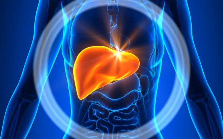 Nerve, Kidney Damage Found to Predict AIP Liver Transplant Outcomes